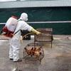 Actively responding to avian influenza