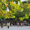 Autumn – Hanoi's most seductive season