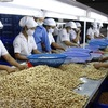 Vietnamese cashew nuts to be introduced in Australia