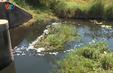 Vụ cá chết hàng loạt ở Hà Tĩnh: Yêu cầu khắc phục sự cố rò rỉ nước từ bãi rác