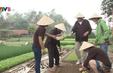 Trải nghiệm làm nông dân thực thụ tại làng rau Trà Quế, Quảng Nam
