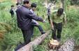 Lâm Đồng: 90.000ha rừng bị chặt phá trong hơn 5 năm trở lại đây