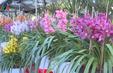 Thời tiết lạnh hoa vụ Tết ở Đà Lạt phát triển chậm