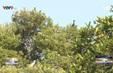 Thú vị nông trại du lịch sân chim Vàm Hồ.