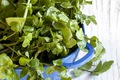 https://vtv1.mediacdn.vn/thumb_w/630/2015/12-watercress-thinkstockphotos-484234994-1442913931103.jpg