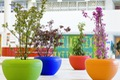 https://vtv1.mediacdn.vn/thumb_w/630/2015/colorful-outdoor-flower-pots-1446536956795.jpg