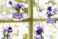 https://vtv1.mediacdn.vn/thumb_w/630/2015/hanging-vases-1445852579292.jpg