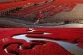 https://vtv1.mediacdn.vn/thumb_w/630/2015/red-beach-panjin-china-face-1422603631021.jpg