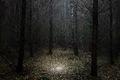 https://vtv1.mediacdn.vn/thumb_w/630/2015/surreal-forest-photograhy-ellie-davis-1-880-1425289985695.jpg