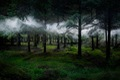 https://vtv1.mediacdn.vn/thumb_w/630/2015/surreal-forest-photograhy-ellie-davis-13-880-1425289985852.jpg