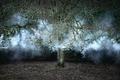 https://vtv1.mediacdn.vn/thumb_w/630/2015/surreal-forest-photograhy-ellie-davis-16-880-1425289985928.jpg