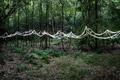 https://vtv1.mediacdn.vn/thumb_w/630/2015/surreal-forest-photograhy-ellie-davis-18-880-1425289985945.jpg