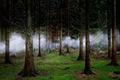 https://vtv1.mediacdn.vn/thumb_w/630/2015/surreal-forest-photograhy-ellie-davis-2-880-1425289985710.jpg