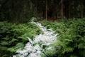 https://vtv1.mediacdn.vn/thumb_w/630/2015/surreal-forest-photograhy-ellie-davis-23-1425289985995.jpg