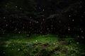 https://vtv1.mediacdn.vn/thumb_w/630/2015/surreal-forest-photograhy-ellie-davis-5-880-1425289985742.jpg