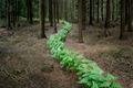 https://vtv1.mediacdn.vn/thumb_w/630/2015/surreal-forest-photograhy-ellie-davis-6-880-1425289985756.jpg