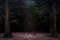 https://vtv1.mediacdn.vn/thumb_w/630/2015/surreal-forest-photograhy-ellie-davis-7-880-1425289985773.jpg