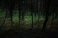 https://vtv1.mediacdn.vn/thumb_w/630/2015/surreal-forest-photograhy-ellie-davis-8-880-1425289985785.jpg