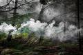 https://vtv1.mediacdn.vn/thumb_w/630/2015/surreal-forest-photograhy-ellie-davis-9-880-1425289985801.jpg