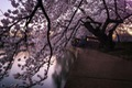 https://vtv1.mediacdn.vn/thumb_w/630/2016/spring-japan-cherry-blossoms-national-geographics-210-1458807772505.jpg