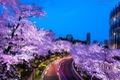 https://vtv1.mediacdn.vn/thumb_w/630/2016/spring-japan-cherry-blossoms-national-geographics-91-1458807678224.jpg