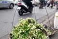 https://vtv1.mediacdn.vn/thumb_w/630/Uploaded/dinhhuong/2014_03_22/hoa_buoi9_220314.jpg