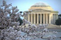 https://vtv1.mediacdn.vn/thumb_w/630/Uploaded/lanchi/2014_03_26/cherry_blossom_Washington_11_270314.jpg