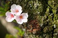 https://vtv1.mediacdn.vn/thumb_w/630/Uploaded/lanchi/2014_03_26/cherry_blossom_Washington_14_270314.jpg