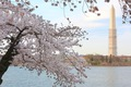 https://vtv1.mediacdn.vn/thumb_w/630/Uploaded/lanchi/2014_03_26/cherry_blossom_Washington_16_270314.jpg