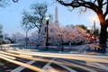 https://vtv1.mediacdn.vn/thumb_w/630/Uploaded/lanchi/2014_03_26/cherry_blossom_Washington_1_270314.jpg