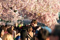 https://vtv1.mediacdn.vn/thumb_w/630/Uploaded/lanchi/2014_03_26/cherry_blossom_Washington_6_270314.jpg