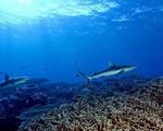 Số lượng sinh vật biển đã giảm mạnh