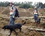 Huấn luyện chó cứu hộ động đất tại Nhật Bản