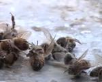 Pháp cấm sử dụng một số loại thuốc trừ sâu trong 3 năm