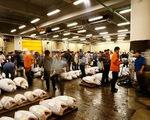 Tsukiji - Chợ cá tươi lớn nhất thế giới tại Nhật Bản