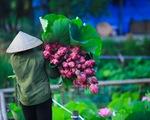 Sen đầu mùa: Thơm ngát từ đầm ra phố