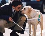 Chó dẫn đường đồng hành cùng người khiếm thị Úc