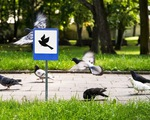 Những sáng tạo đầy tính nhân văn dành cho động vật