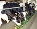 Vì sao thực phẩm sạch chưa thể tiếp cận thị trường?