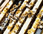 Theo chân thợ săn mật ong rừng tại Malaysia - ảnh 1