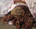 TP.HCM: Tiêu hủy 1 tấn me bẩn, chảy nước