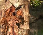 Vĩnh Long: Kẻ gian phá hoại nhiều vườn cây ăn trái