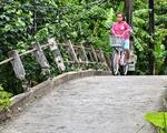 Lãnh đạo TP Cần Thơ chỉ đạo làm rõ vụ đập lan can cầu nông thôn
