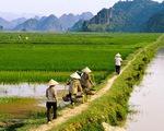Tiếp tục miễn giảm thuế sử dụng đất nông nghiệp
