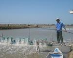 Chấn chỉnh sản xuất giống để xây dựng thương hiệu tôm Việt Nam