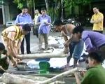 Bắc Giang: Bắt giữ gần 600kg gỗ sưa đỏ vận chuyển trái phép