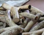 Xử lý nghiêm các hành vi xâm hại động vật hoang dã