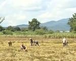 Nam Trung Bộ, Tây Nguyên khắc phục hậu quả, ổn định đời sống sau mưa lũ