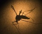 Chất liệu chống muỗi hiệu quả gấp 6 lần bình xịt