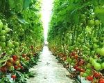 Thiếu cơ chế cho khoa học công nghệ, DN ngại tham gia vào nông nghiệp